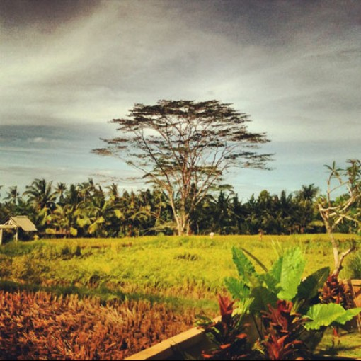 2 days in Bali : Helevetica wood 3 update / Hubud workshop / New home !